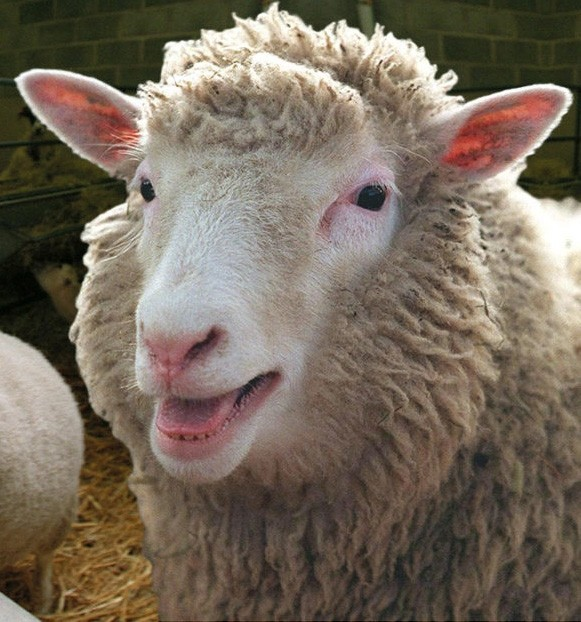 Dolly the Sheep (1997-2003).