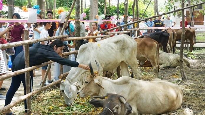 People from all walks of life participated in ceremonies to spare the lives of the cattle.