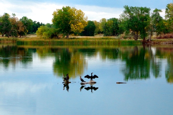 In this Sept. 26, 2012 file photo, a cormorant dries its wings after diving for fish in Lake Ladora at the Rocky Mountain Arsenal National Wildlife Refuge in Commerce City, Colo. (AP Photo/Donna Bryson)