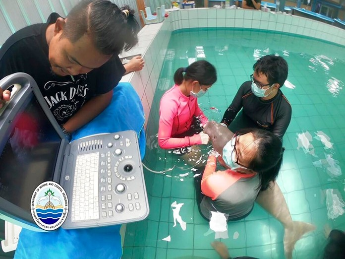 In this Thursday, Aug. 22, 2019. photo, staff of the Department of Marine and Coastal Resources deliver medicine through a feeding tube to Yamil the dugong at Phuket Marine Biological Center. (The Department of Marine and Coastal Resources via AP)