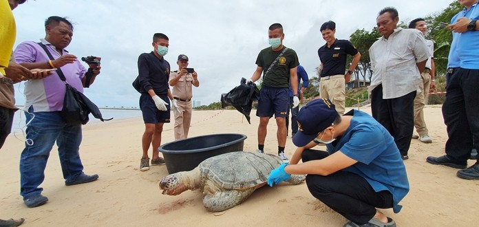 Another dead turtle washed up on a Sattahip beach, bringing this week's total to nine.