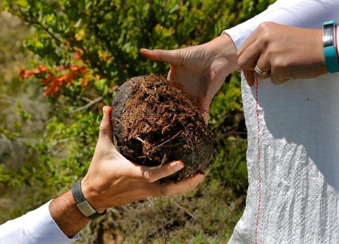 Les Ansley, and his wife Paula, collect fresh elephant dung in the Botlierskop Private Game Reserve, near Mossel Bay, South Africa, Tuesday, Oct. 24, 2019. (AP Photo/Denis Farrell)