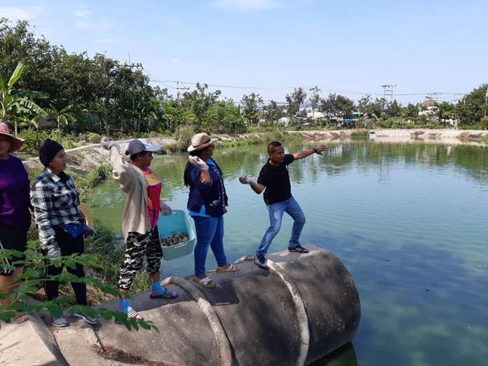 Nongprue Mayor Mai Chaiyanit, subdistrict council members and community leaders shown low-income East Pattaya residents how to clean a wastewater treatment pond that has been unable to process sewage for two years.