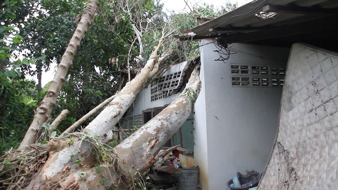 Two people were injured and two homes damaged when strong winds felled two trees in Banglamung.