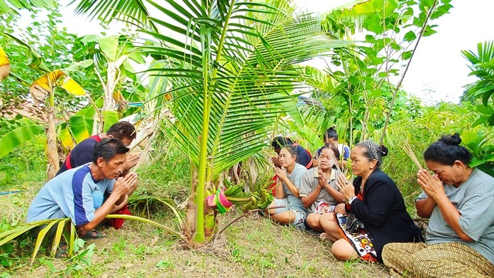 Lottery gamblers flocked to a Sattahip coconut tree which they claimed...