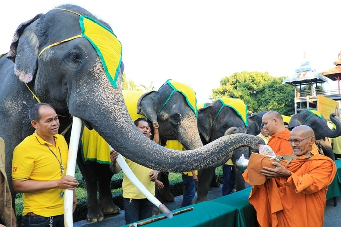 At Nong Nooch Tropical Gardens, nine elephants give alms to monks.