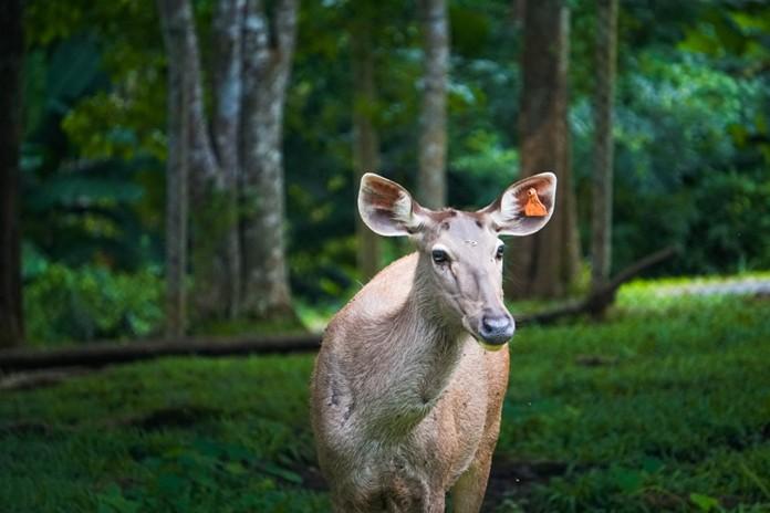Khao Kho Open Zoo