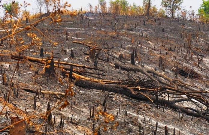 The Ministry of Natural Resources and Environment plans reforestation in the North of Thailand after the damage from extended forest fires.