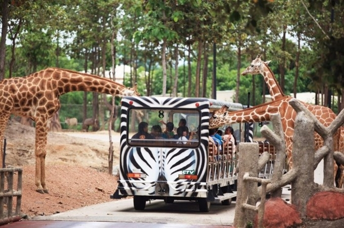 Chiang Mai Night Safari located at the foot of Doi Suthep, about 12 kilometers from the city of Chiang Mai. The zoo is closed for the health public protection since March 27, 2020.