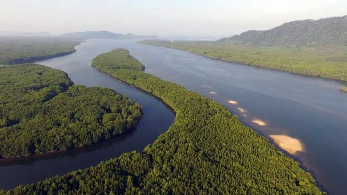 Ranong mangrove forest area, southern Thailand.