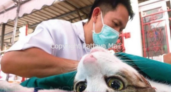 Pattaya City has announced their mobile pet care units events for June.