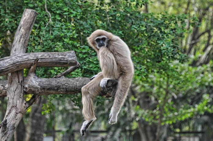 Khao Kheow Open Zoo, Chonburi Province.