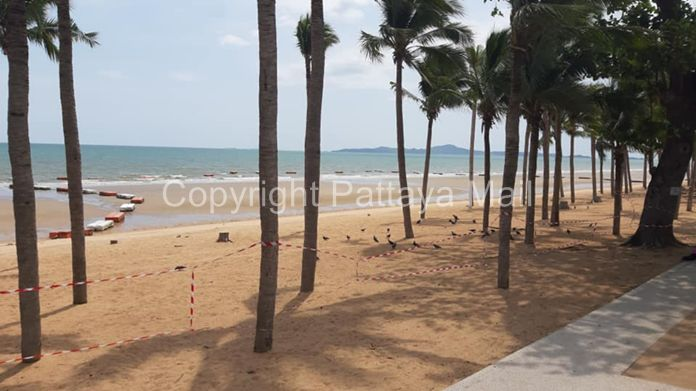 Jomtien Beach on a sunny day when humans are not allowed to encroach onto the sand and sea area. Birds take this liberty to gather on the beach for some food.
