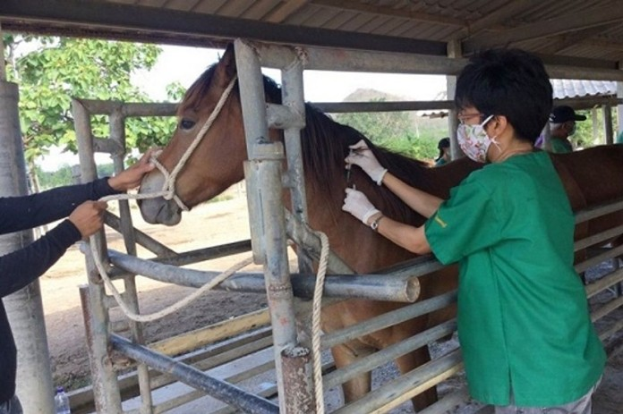 The Livestock Development Department gave 8,000-dose vaccination for horses in a radius of 50 kilometers from outbreak epicenters in the 12 provinces and 7 adjacent provinces.
