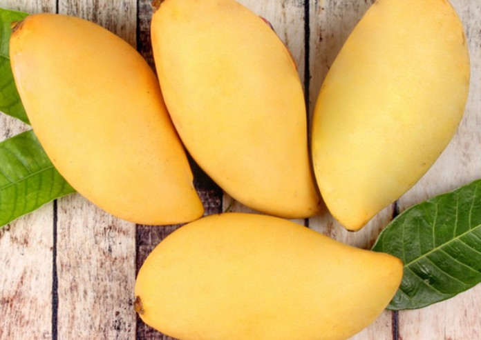 Mango, is one of the main Thailand's fruit exporting products that are in high demand in the global market.