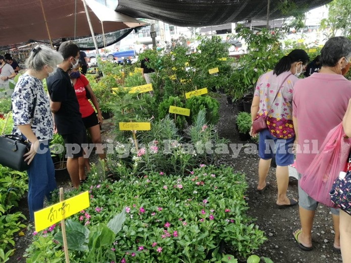 Plants lovers have returned to local markets to help liven up their homes after the lockdown.