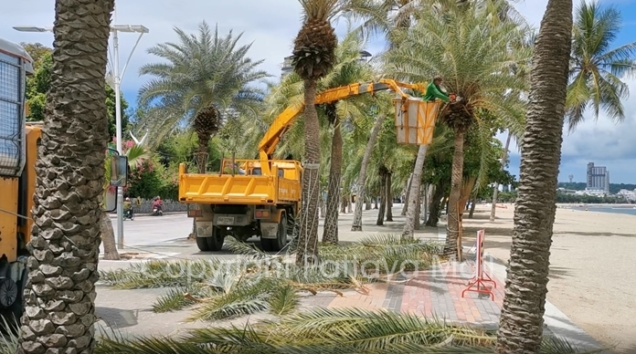 Environment Department workers were out June 1 pruning trees on Pattaya and Jomtien Beaches.