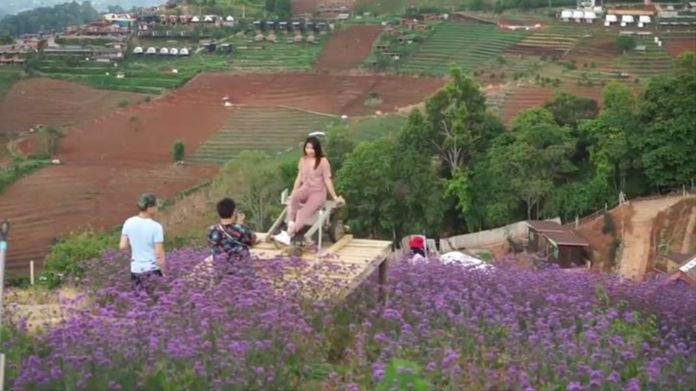 Mon Chaem mountain in Mae Rim district of Chiang Mai was welcoming visitors who were attracted to its temperate flower zone.
