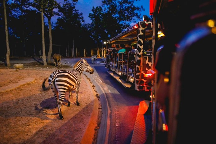 Chiang Mai Night Safari entrance is free of charge on July 1-15, and will be 50% off from July 16-31.