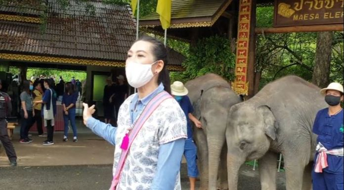 Chiang Mai Zoo reopened its doors to visitors after a three-month closure with offers of free admission to all visitors until the end of June.