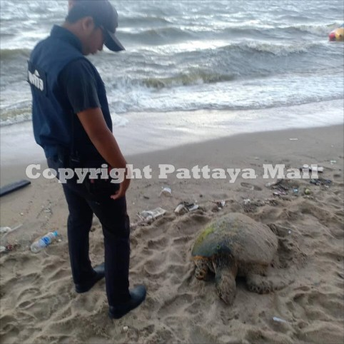 Among the garbage washed up was a dead turtle, who died after eating plastic.