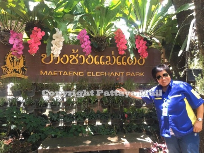 Mae Tang Elephant Park is open for business again and people are flocking in to feed and ride the pachyderms.