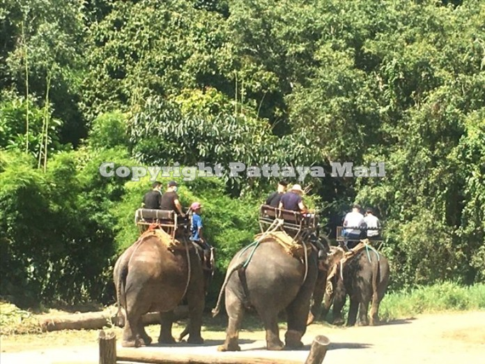 Elephant rides are a must when you visit elephant parks in Thailand.
