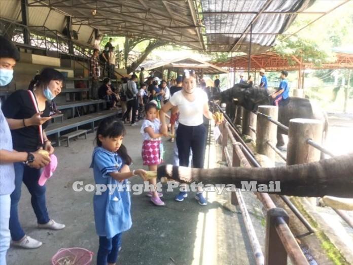 A shy little girl feeds an elephant at the park.