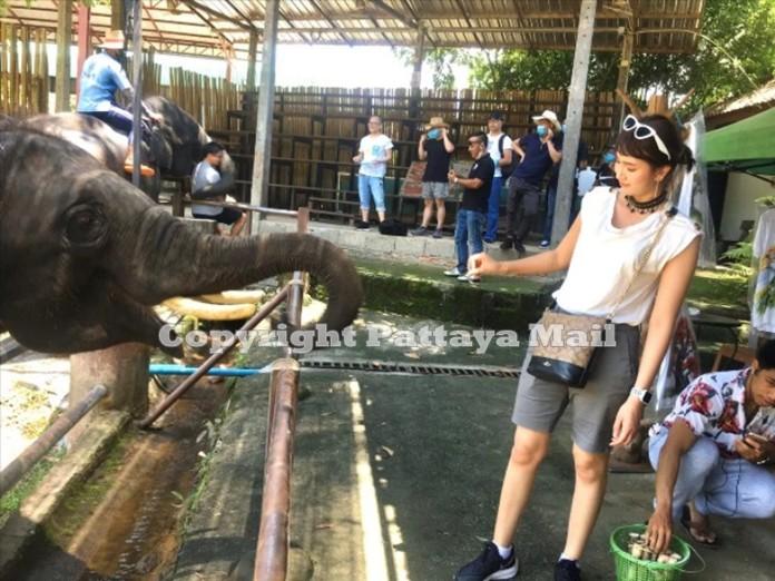 A tourist enjoys feeding the elephants.