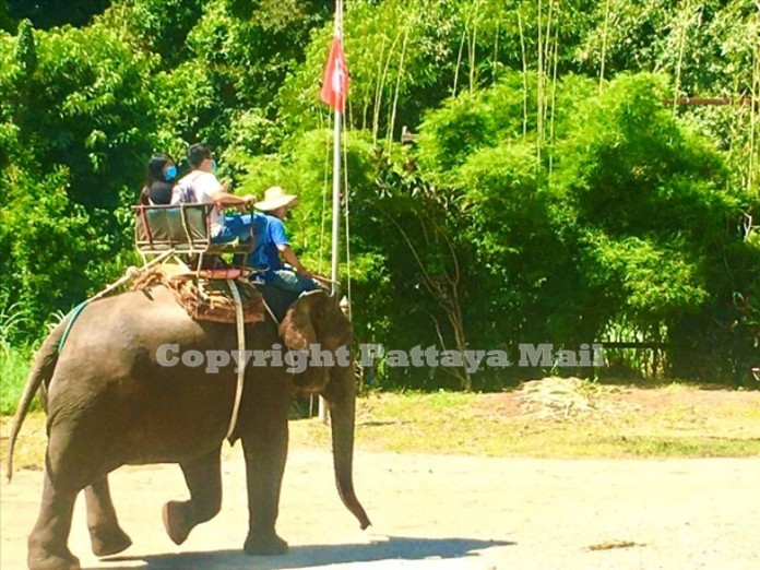 Off they go into the jungle riding a gigantic animal.