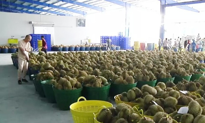 The new 700-million-baht plant boosts investment confidence in the far South and raises the company's daily durian purchase from 200 to 500 tons.