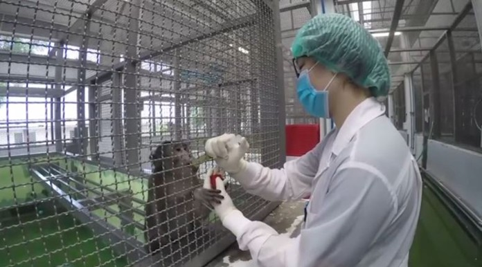 Phase two of vaccine trial in monkeys, which began in June, had showed great results.