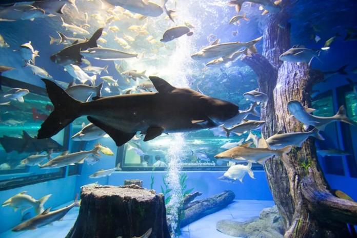 Bueng Chawak Aquarium