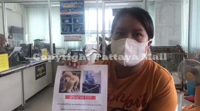 A distraught Natthakarn Siriwat went to Samed police in Muang District Saturday with a handout depicting 3-month-old Cornae and the two thieves speeding away with the pup on a motorbike.