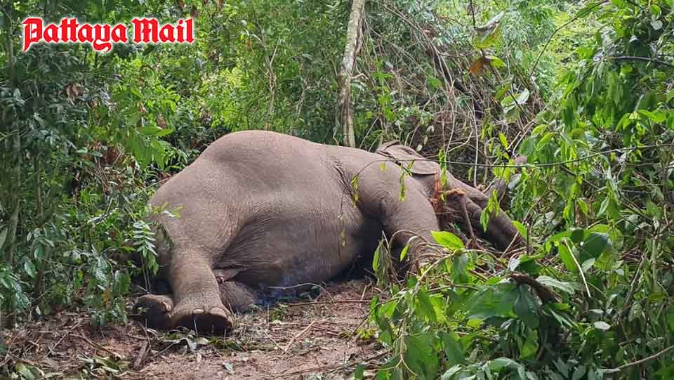 Boonklong, a 40-year-old elephant, died after it was struck by lightning at a Pattaya elephant camp.