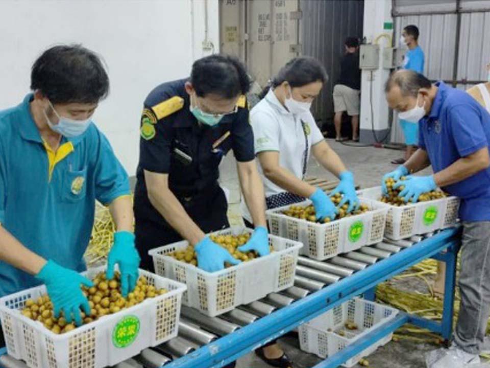 t 12 Thailand resumes longan export to China 1